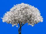 Vysazení stromu na počest Olgy Havlové v Příbrami