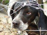 Psa své přítelkyně ubil k smrti