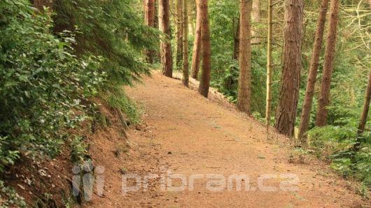 Inspekce životního prostředí: V oblasti ochrany lesa jsme nezaznamenali nedostatky