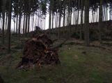 Vítr na Příbramsku vyvrátil desítky stromů ()