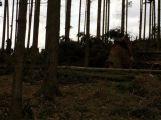 Vítr na Příbramsku vyvrátil desítky stromů (1)