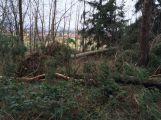 Vítr na Příbramsku vyvrátil desítky stromů (2)