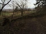 Vítr na Příbramsku vyvrátil desítky stromů (3)
