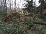 Vítr na Příbramsku vyvrátil desítky stromů (4)