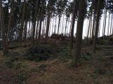 Vítr na Příbramsku vyvrátil desítky stromů (5)