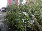 Středočeským hasičům připravil silný vítr přes tisíc zásahů! (6)