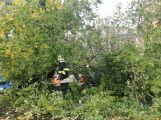 Středočeským hasičům připravil silný vítr přes tisíc zásahů! (3)