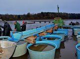 Dolejší Padrťský rybník byl pod útokem rybářů (25)