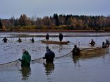 Dolejší Padrťský rybník byl pod útokem rybářů (26)