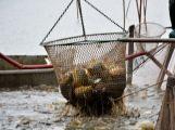 Dolejší Padrťský rybník byl pod útokem rybářů (35)