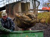 Dolejší Padrťský rybník byl pod útokem rybářů (36)