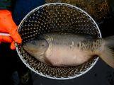 Dolejší Padrťský rybník byl pod útokem rybářů (19)