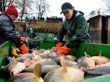 Dolejší Padrťský rybník byl pod útokem rybářů (9)