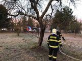 K hořícímu stromu právě teď vyjel HZS Příbram (4)