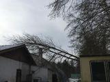 Aktuálně: Hasiči vyjeli likvidovat padlý strom ()