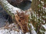 Aktuálně: Hasiči vyjeli likvidovat padlý strom (3)