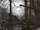 Aktuálně: Hasiči vyjeli likvidovat padlý strom (7)