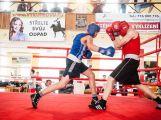 Jak si vedli o víkendu příbramští boxeři? (VÝSLEDKY) (1)
