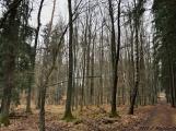 6. Jarní výstup na Petráškovu horu aneb překrásnou brdskou krajinou proti průzkumu a těžbě zlata (9)