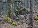 6. Jarní výstup na Petráškovu horu aneb překrásnou brdskou krajinou proti průzkumu a těžbě zlata (7)