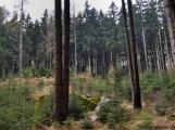 6. Jarní výstup na Petráškovu horu aneb překrásnou brdskou krajinou proti průzkumu a těžbě zlata (6)