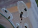 ZŠ Školní se proměnila v ráj hmyzu (9)