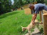 Minizoo obydlena! Ovce a kůzlata si zvykají na nové prostředí (1)