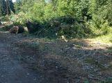 V lesoparku bylo pokáceno několik stromů (AKTUALIZOVÁNO) ()