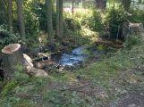 V lesoparku bylo pokáceno několik stromů (AKTUALIZOVÁNO) (7)