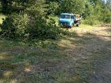 V lesoparku bylo pokáceno několik stromů (AKTUALIZOVÁNO) (4)