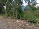 V lesoparku bylo pokáceno několik stromů (AKTUALIZOVÁNO) (2)