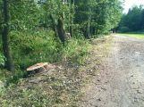 V lesoparku bylo pokáceno několik stromů (AKTUALIZOVÁNO) (9)