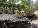 AKTUÁLNĚ: U vrcholu kopce Strážný, nedaleko Trhových Dušníků hoří les (24)
