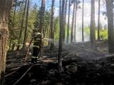 Požár v lese u Čenkova. Příčina - ohniště v lese na hrabance. (8)