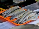V Rožmitále slavili myslivci i rybáři (67)