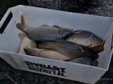 V Rožmitále slavili myslivci i rybáři (91)