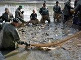 V Rožmitále slavili myslivci i rybáři (95)