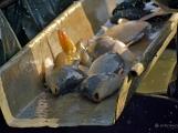 V Rožmitále slavili myslivci i rybáři (76)