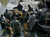 V Rožmitále slavili myslivci i rybáři (85)