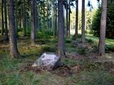 Vojenské lesy otevřely v Brdech naučnou stezku, která představuje minulost i budoucnost brdské přírody (75)
