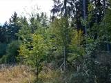 Vojenské lesy otevřely v Brdech naučnou stezku, která představuje minulost i budoucnost brdské přírody (61)
