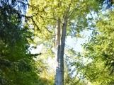 Vojenské lesy otevřely v Brdech naučnou stezku, která představuje minulost i budoucnost brdské přírody (64)