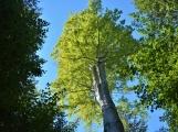 Vojenské lesy otevřely v Brdech naučnou stezku, která představuje minulost i budoucnost brdské přírody (65)