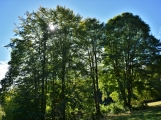Vojenské lesy otevřely v Brdech naučnou stezku, která představuje minulost i budoucnost brdské přírody (11)