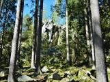 Vojenské lesy otevřely v Brdech naučnou stezku, která představuje minulost i budoucnost brdské přírody (16)