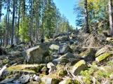 Vojenské lesy otevřely v Brdech naučnou stezku, která představuje minulost i budoucnost brdské přírody (17)