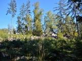 Vojenské lesy otevřely v Brdech naučnou stezku, která představuje minulost i budoucnost brdské přírody (10)