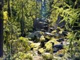 Vojenské lesy otevřely v Brdech naučnou stezku, která představuje minulost i budoucnost brdské přírody (9)
