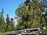 Vojenské lesy otevřely v Brdech naučnou stezku, která představuje minulost i budoucnost brdské přírody (1)