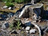 Vojenské lesy otevřely v Brdech naučnou stezku, která představuje minulost i budoucnost brdské přírody (34)